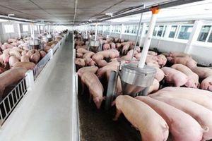 Nông nghiệp ĐBSH: Tạo sự đột phá trong phát triển chăn nuôi