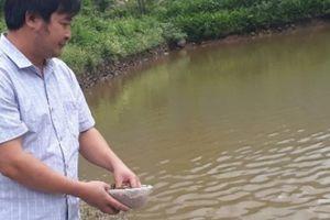 Đào ao thả cá giữa thung lũng hoang vắng, lãi hơn 300 triệu/năm