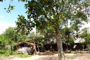 Đắk Lắk: 'Cái chết trắng' len lỏi, tàn phá buôn nghèo