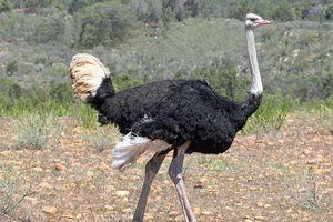 Top 10 loài chim lớn nhất thế giới