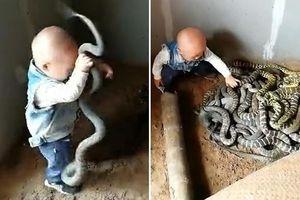 Hãi hùng cảnh bé trai chơi đùa với đàn rắn, bố mẹ đứng ngoài cổ vũ