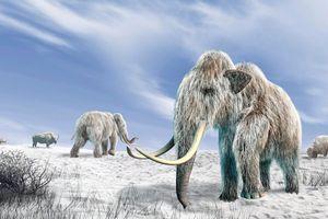 Phát hiện xương voi ma mút cổ đại 130.000 năm tuổi