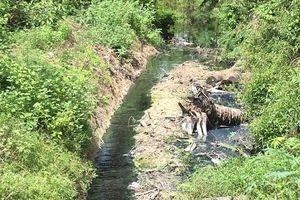 Bình Định: Doanh nghiệp xả thải gây ô nhiễm bị phạt gần 300 triệu đồng