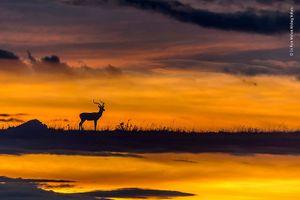 20 bức ảnh đẹp nhất Cuộc thi ảnh Thiên nhiên hoang dã 2018
