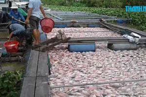 Cá chết bất thường, dân méo mặt vì mất bạc tỉ