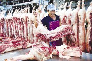 Giá heo tăng, ngành chăn nuôi lo hơn mừng