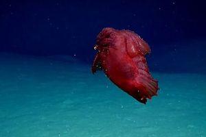 Nam Cực: Phát hiện quái vật 'gà không đầu' dưới đáy biển