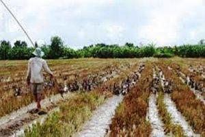 4 nông dân chăn vịt yêu cầu bồi thường gần 1 tỷ đồng
