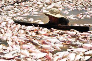 Dân làng bè khốn đốn vì chưa được nhận tiền hỗ trợ 1.900 tấn cá chết