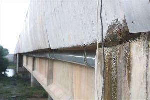 Cầu, hầm chui của cao tốc Đà Nẵng - Quảng Ngãi thấm giọt, đóng rêu sau 2 tháng thông xe