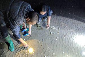 Quảng Ninh: Người nuôi trồng khóc ròng vì hàng trăm tấn ngao đột nhiên chết không rõ nguyên nhân sau một đêm