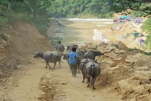 Tăng cường kiểm tra, xử lý buôn lậu gia súc qua biên giới