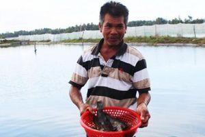 Quảng Nam: Nuôi tôm suýt vỡ nợ, nuôi cá mú háu ăn lại lãi nửa tỷ
