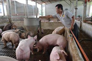 Giá lợn hơi tăng do nguồn cung giảm