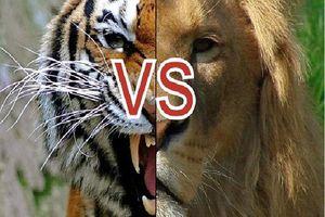 Kịch bản của cuộc chiến giữa sư tử và hổ