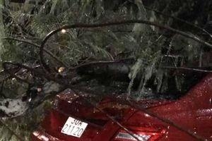 Mercedes mất lái 'hạ gục' cây lớn trên đường Thanh Niên