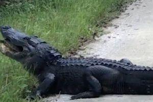 Rợn người âm thanh cá sấu nhai nát mai rùa