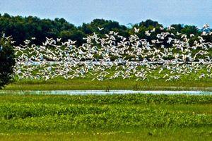 Ramsar Tràm Chim - 'Đồng Tháp Mười thu nhỏ' vào mùa nước nổi