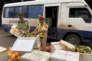 Quảng Ninh: Bắt đối tượng vận chuyển trái phép gần 1,4 tấn hoa quả