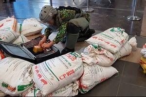 Diễn tập đối phó tình huống đặt bom, mìn tại Sân bay Nội Bài