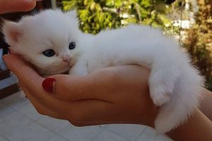Chùm ảnh: Vẻ đẹp ngọt ngào và siêu đáng yêu của những chú mèo con