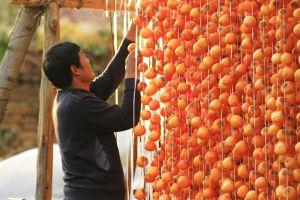 Rực rỡ mùa hồng chín ở Sơn Đông (Trung Quốc)