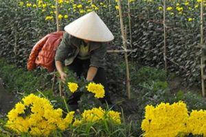 Mê Linh: Chỉ nuôi cá, trồng hoa... nông dân cũng có nửa tỷ mỗi năm