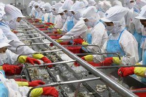 Công ty mẹ Thủy sản Minh Phú báo lãi 536 tỷ đồng sau 9 tháng đầu năm