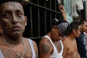 Mỹ truy quét 5 băng nhóm tội phạm xuyên quốc gia