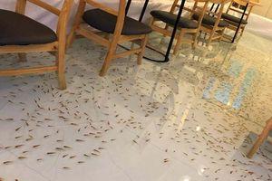 Quán cà phê cá bơi dưới ghế ngồi của Việt Nam lên báo nước ngoài