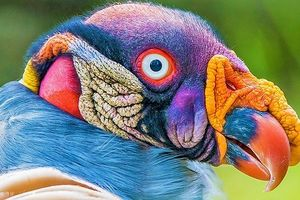 10 loài chim giống người ngoài hành tinh hơn động vật