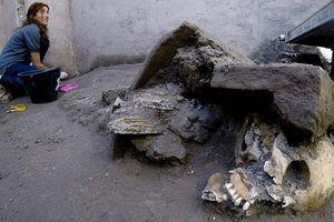 Phát hiện sốc về 5 bộ xương còn nguyên vẹn sau thảm họa núi lửa Vesuvius 2.000 năm trước