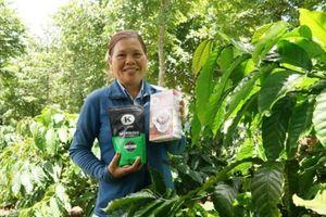 Nông dân 'chuẩn UTZ': Cực nhọc nhưng an lòng