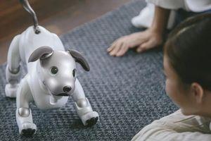 Sự thật về robot chó mèo, liệu chúng có thể thay thế thú cưng thật sự?