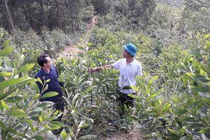 Tuyên Quang: Điểm sáng trồng rừng