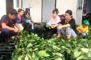 'Bí mật' khu bảo tồn trên 40 loài trà hoa vàng quý hiếm ở Việt Nam