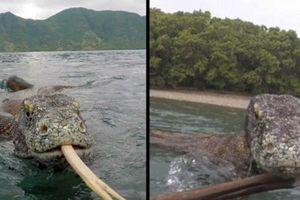 Cuộc chiến 'nảy lửa' giữa ngư dân và rồng Komodo
