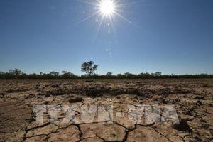 Australia lập quỹ hỗ trợ nông dân chống hạn hán trong tương lai