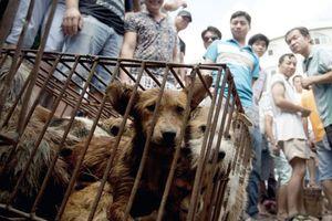 Hai lao động Việt ở Đài Loan bị buộc tội giết và ăn thịt chó