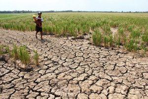 BẢN TIN TÀI CHÍNH-KINH DOANH: Nông nghiệp Việt Nam mất 3,6 triệu USD vì El Nino, xuất khẩu sang Mỹ đạt 35 tỷ USD