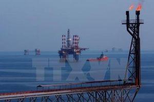 Giá dầu giảm nhờ những tín hiệu từ Saudi Arabia