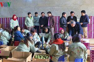 Tiếp tục tái cơ cấu để nông nghiệp Sơn La phát triển bền vững