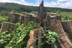 Vẫn đang truy tìm thủ phạm vụ phá rừng ở Bình Phước