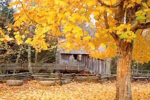 Đến với bài thơ hay: Thơ tình cuối mùa thu...