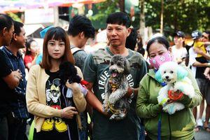 'Ngất ngây' trước hàng trăm chó cảnh trong 'Lễ hội cún cưng Sài Gòn'