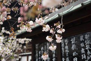 Minh chứng cho thấy đi du lịch một mình đến Nhật Bản là trải nghiệm đáng nhớ trong cuộc đời