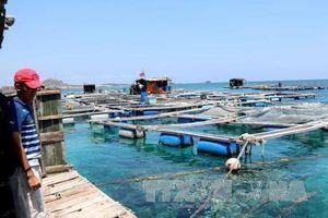 Hướng dẫn nuôi trồng thủy sản biển có truy xuất nguồn gốc