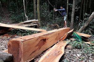 Ban quản lý rừng Đắk Đoa trục lợi hơn 5 tỷ đồng