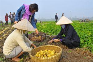 Đánh thức vụ đông: Bắc Giang thay đổi tư duy