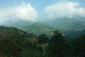 Giảm trên 50% diện tích rừng thiệt hại
